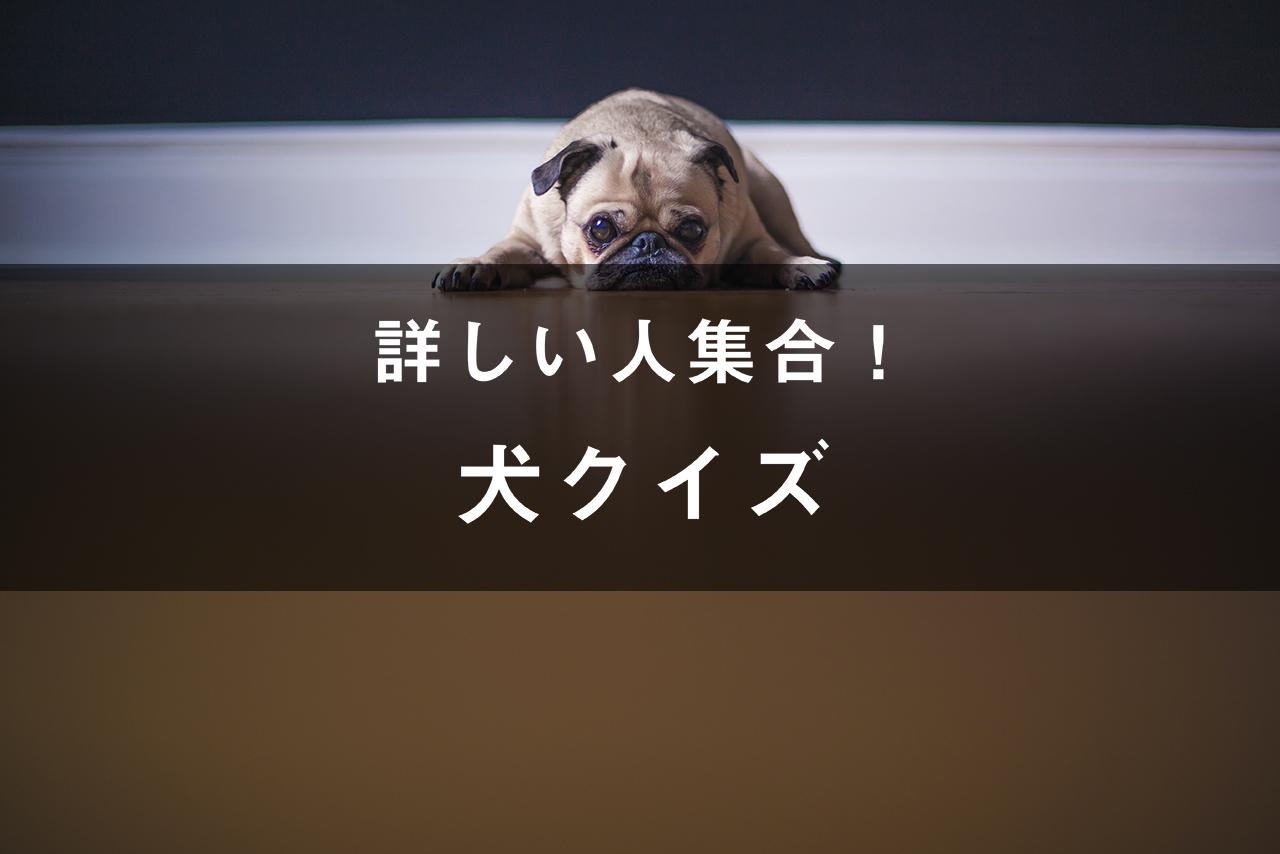 詳しい人集合!犬クイズ